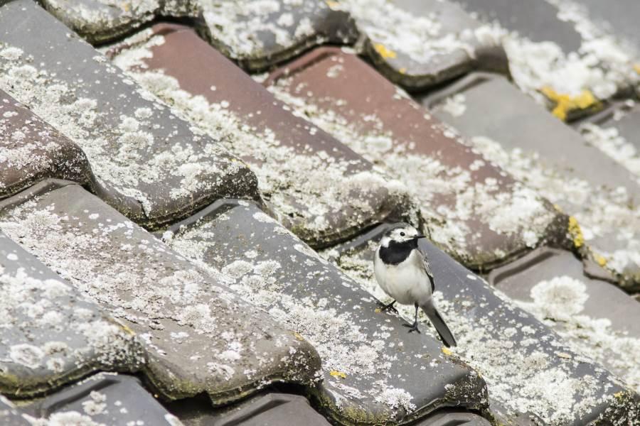 Prijzen dak reinigen