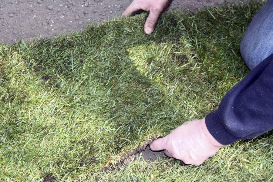 gras aanleggen prijzen
