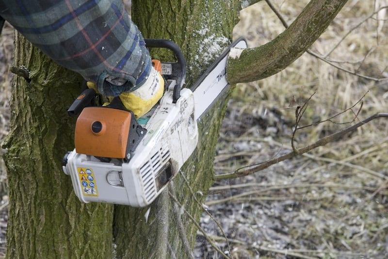 wat kost een boom kappen