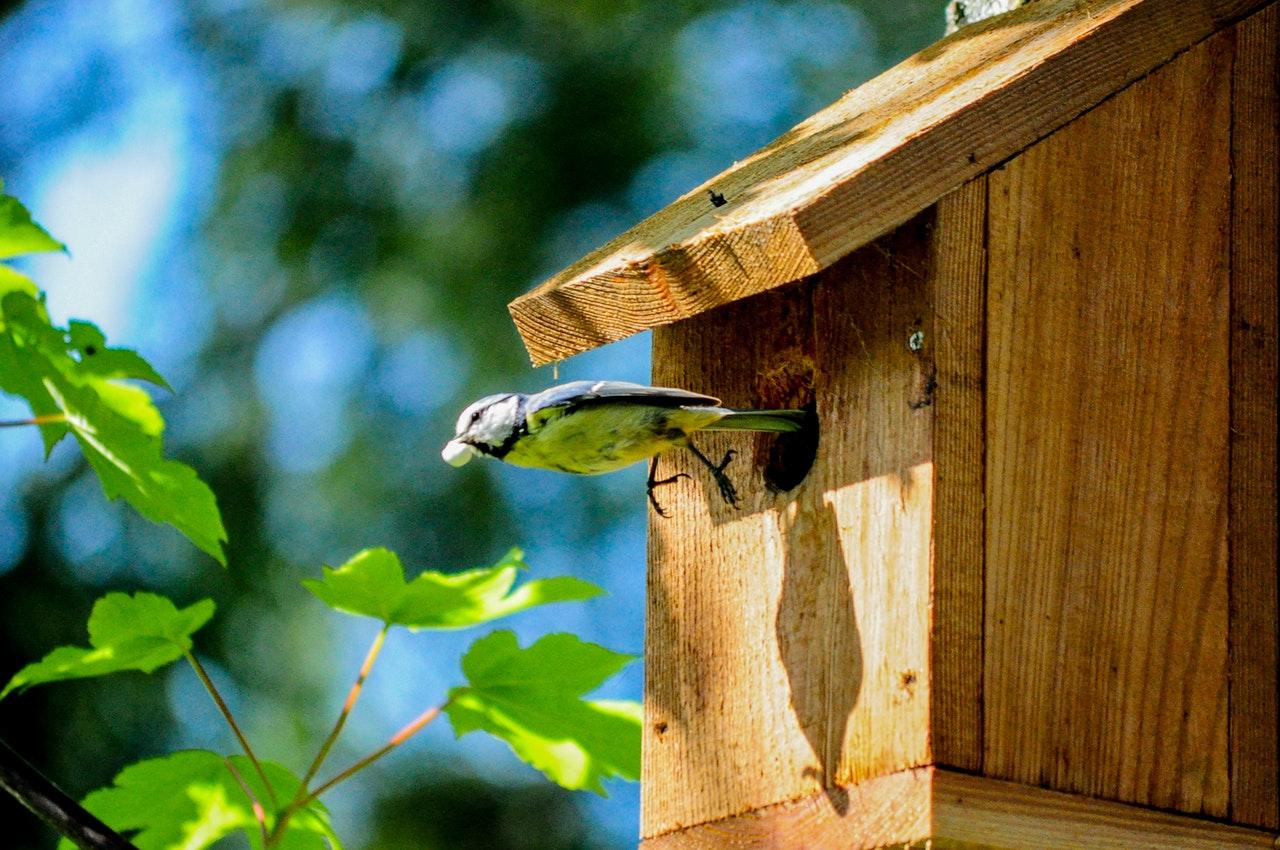diervriendelijke tuin vogelhuis