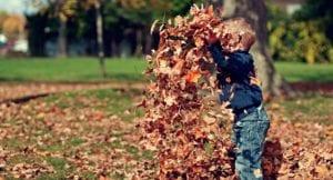 herfstklaar maken tuin