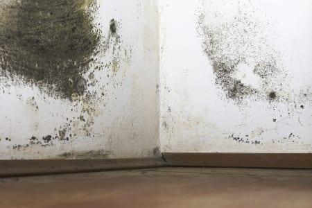 Schimmel Verwijderen Muur : Schimmel verwijderen de kosten prijzen handige tips homedeal