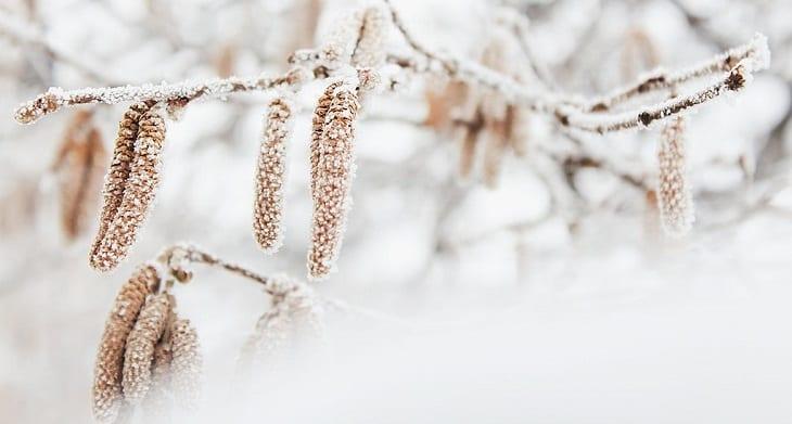 winterbloeiers