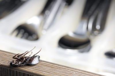 kakkerlakkenbestrijding