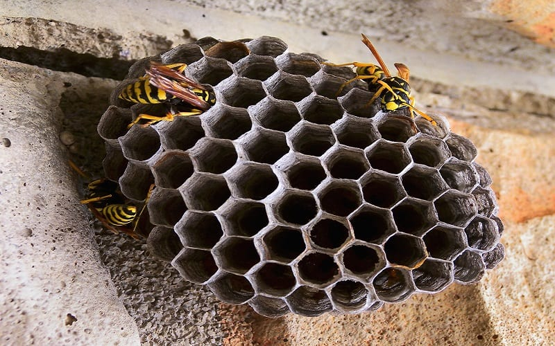 Wat kost een wespennest verwijderen