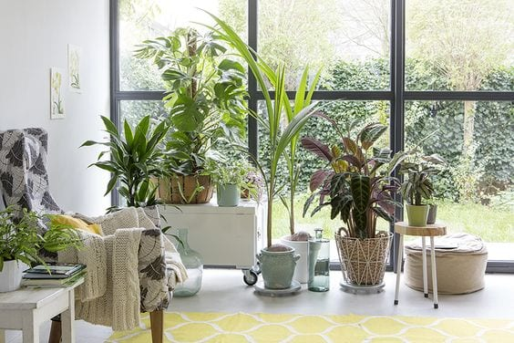 Planten woonkamer | HomeDeal NL
