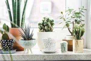 Vensterbank decoratie: cactussen