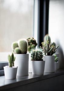 vensterbank decoratie: cactus