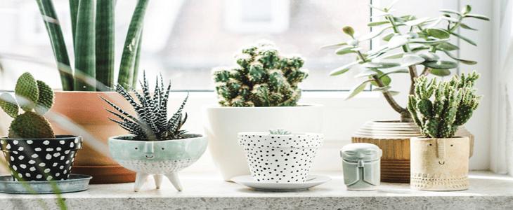 Vensterbank decoratie | 5 tips voor een trendy vensterbank