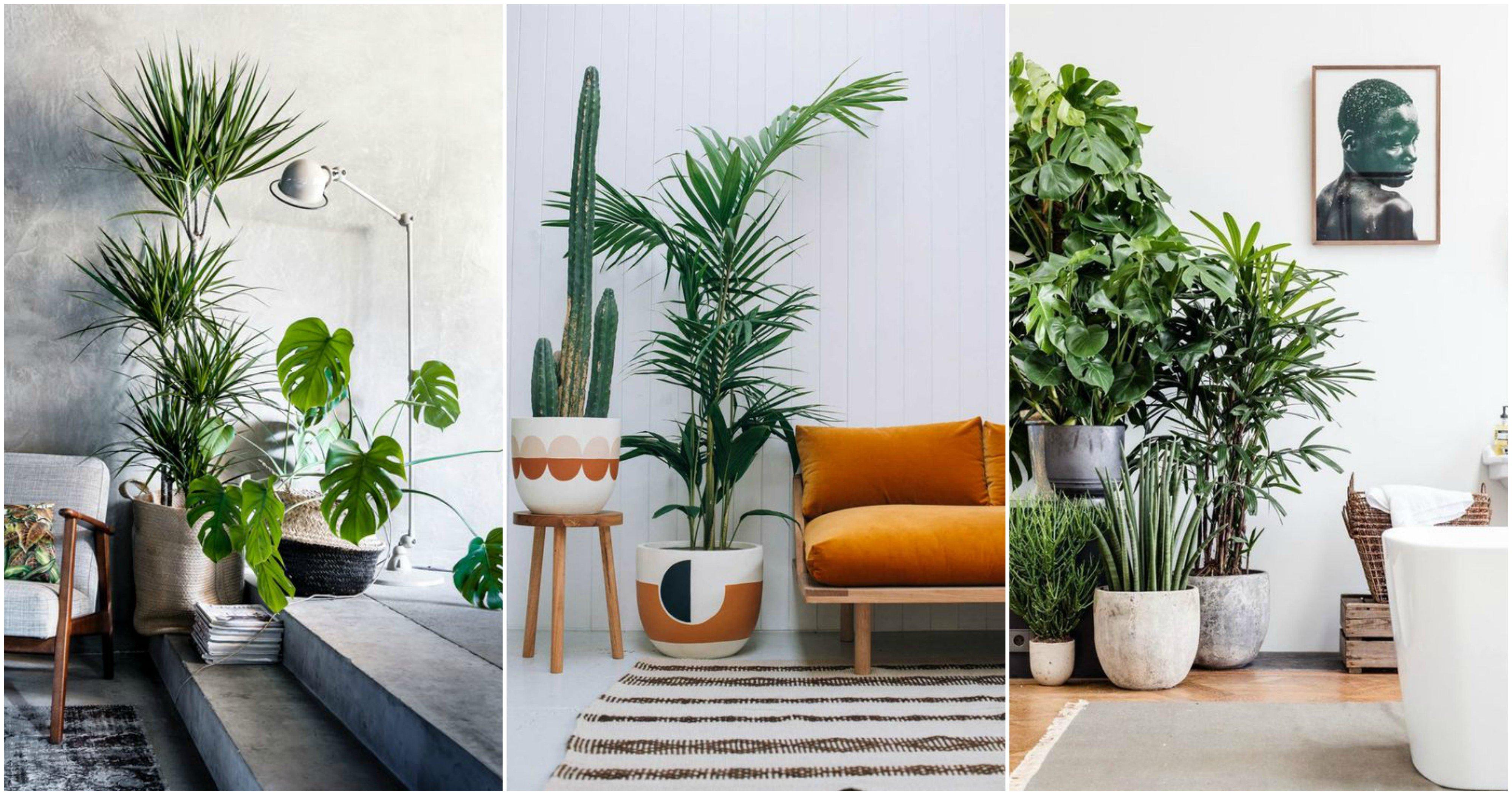 5x kamerplanten die weinig water nodig hebben.