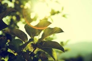 Zonnepanelen zonlicht