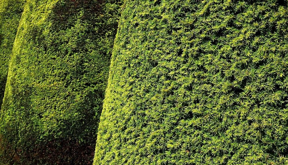wat kost een tuinman: onderhoud