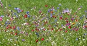 verwilderingsbloemen tuinonderhoud
