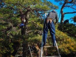 Boom kappen tuinonderhoud