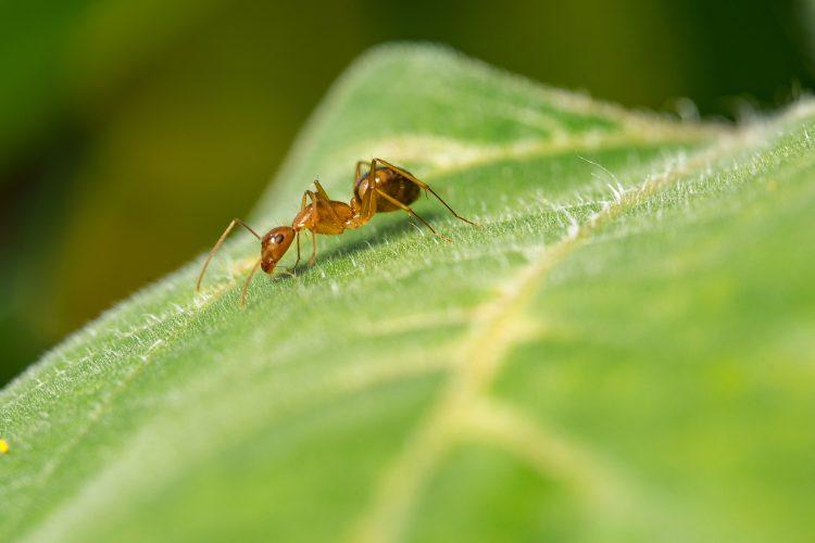 Mieren bestrijden tuin